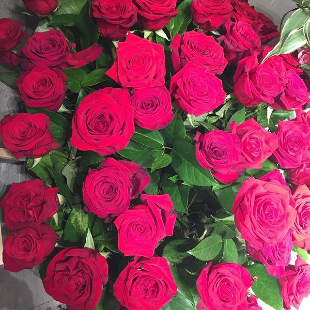 気分転換に撮って見ました。力強く。愛おしく幸せであれ。#ローズアザレ#マグノリア#ローズパープル#ルージュヴィフ#ルージュカザック